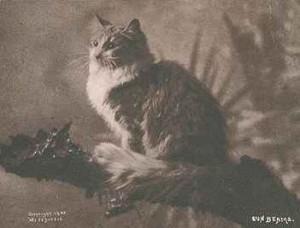 Maine Coon 1899 by CE Bullard *