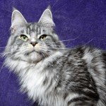 Franka - YOU ARE FLUFFY Catroad *PL, maine coon