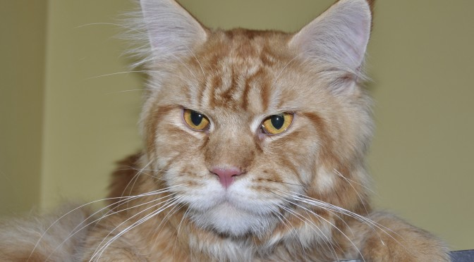 Najgorętszy news tego lata – przedstawiamy nowego kocurka | The hottest news this summer – we present a new male cat