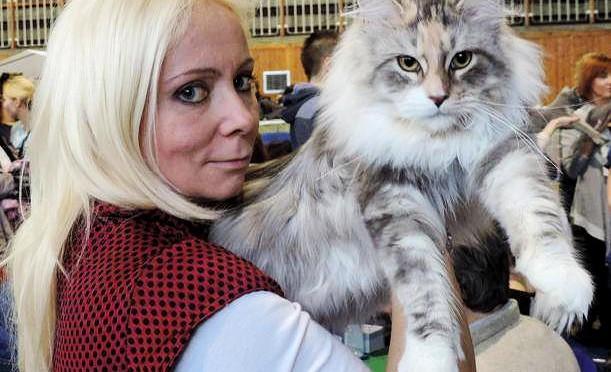 Styczniowa wystawa kotów rasowych