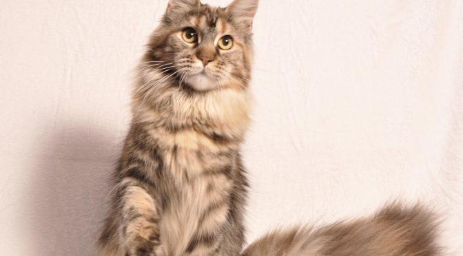 "Mamy dostępne również troszkę ""podrośnięte"" kocięta | We have a little bit older kittens available"