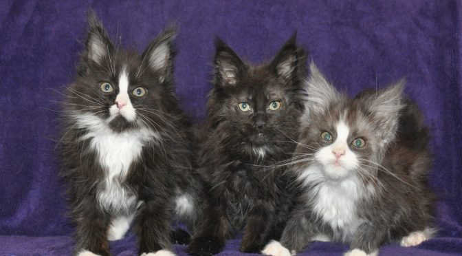 Dostępne kocięta