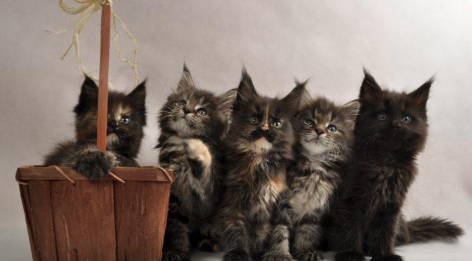 Mamy Kocięta !!! | We have a kittens