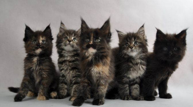 Mamy kocięta ! | We have a kittens !