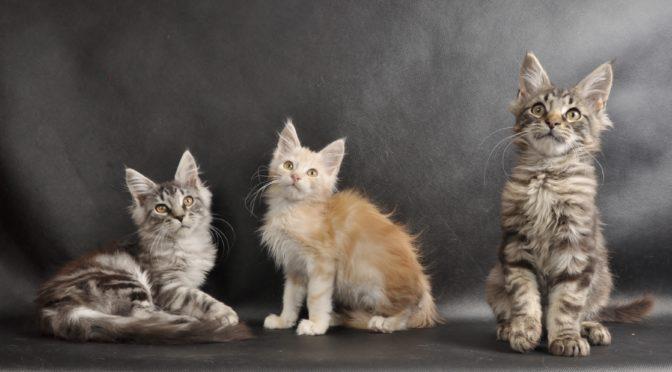 Mamy dostępne kocięta!!! | We have available kittens !!!