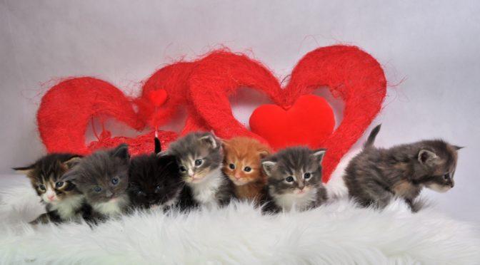 Mamy dostępne kocięta | we have available kittens